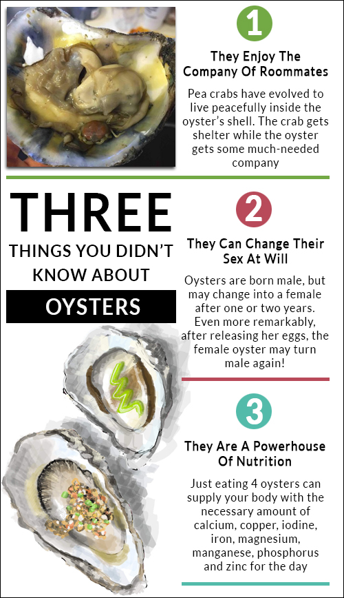 Oyster-trivia-infographic